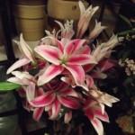 flores-a-domicilio