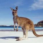 viajes-australia